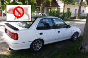 Egy Suzuki, ami szopós malacért nem eladó