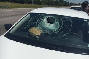 Repülő teknős szakította át a szélvédőt