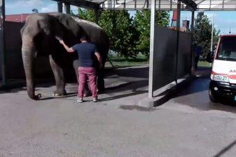 Elefántot mostak egy szerencsi benzinkúton, videó is készült róla